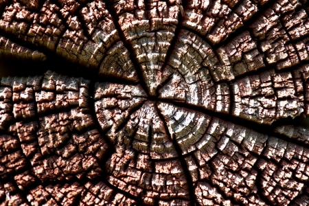 Closeup of the texture of old wood
