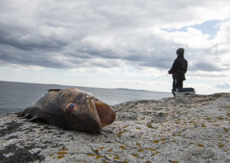 Young fisherman catch a cod, laying on a rock.