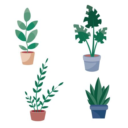 set of indoor plants in brown pots, isolated object on a white background, vector illustration, Foto de archivo - 143040428