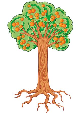 apple tree with apples and roots, isolated object on a white background, vector illustration, eps Vectores