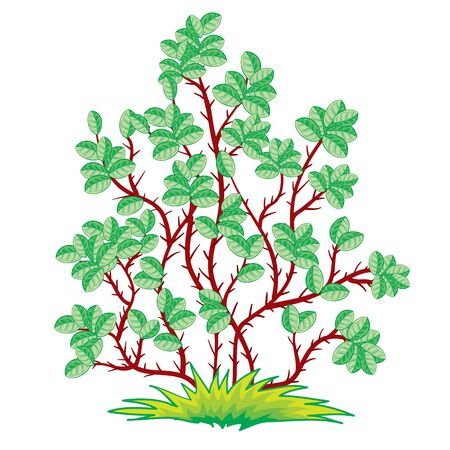 green bush with brown branches, isolated object on a white background, vector illustration