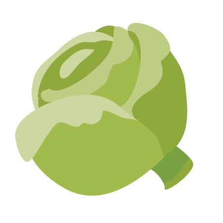 head of cabbage, flat, isolated object on a white background, vector illustration, eps