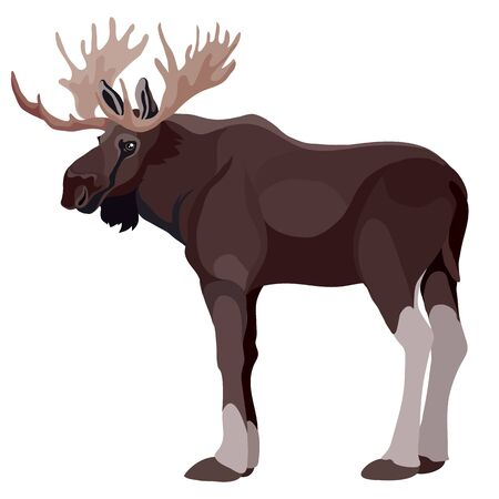 moose elk in natural style, isolated object on a white background, vector illustration