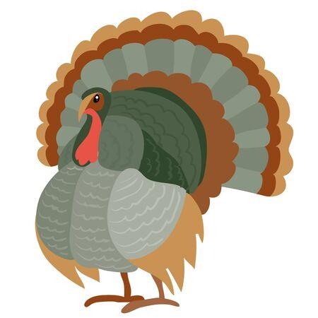 natural turkey bird from farm isolated object on white background. vector illustration Illusztráció