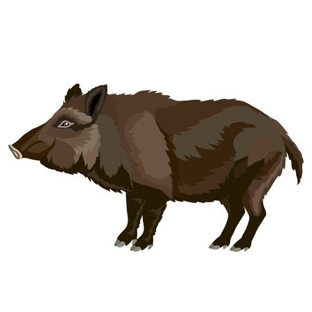 wild boar in brown, naturalness, ferocity, isolated object on a white background, vector illustration, eps