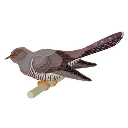 cuckoos made in the technique vector
