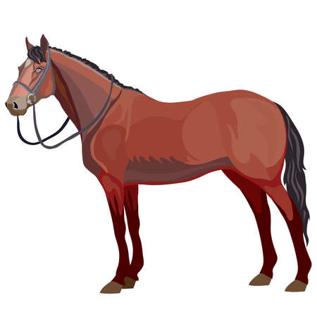 brown horse in natural style, isolated object on a white background, vector illustration