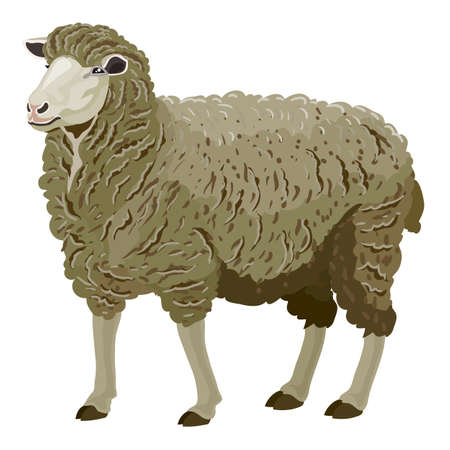 gray sheep in natural style, isolated object on a white background, vector illustration