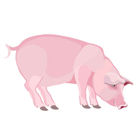 pink pig in natural style, isolated object on a white background, vector illustration