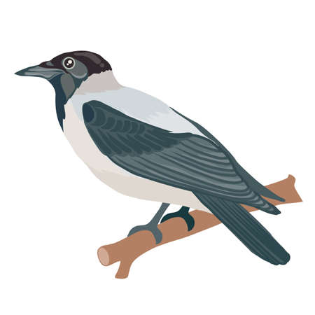 crow in natural style sits on a branch, isolated object on a white background, vector illustration