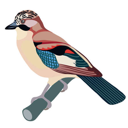 jay bird sitting on a branch, isolated object on a white background, vector illustration