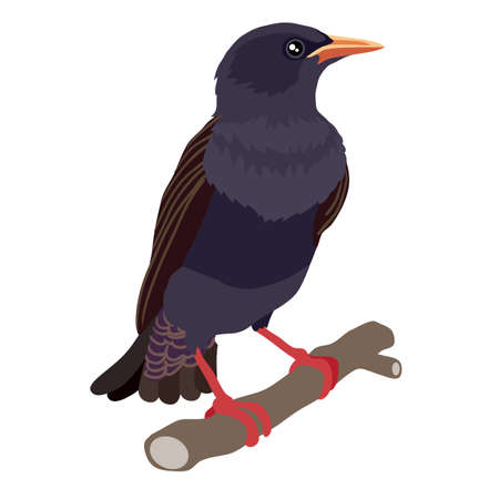 Starling bird sitting on a branch, isolated object on a white background, vector illustration