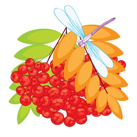 bunch of red mountain ash with green and yellow leaves and a dragonfly sitting on top, bouquet, isolated object on a white background, vector illustration, eps
