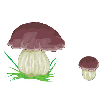 white mushroom with brown cap, isolated object on white background, vector illustration, eps