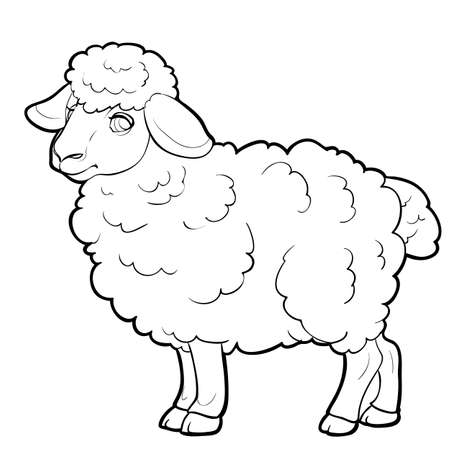 sheep sketch, farm, coloring, isolated object on a white background, vector illustration, eps Vector Illustration