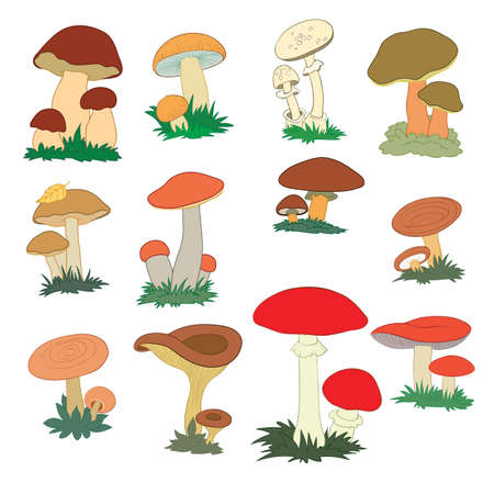 set of different edible mushrooms, cartoon illustration, isolated object on white, vector illustration, eps  イラスト・ベクター素材
