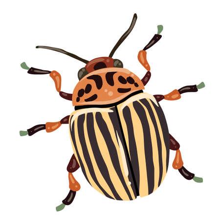colorado potato beetle, isolated object on white background, vector illustration
