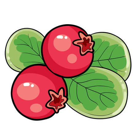redberry on a bush with green leaves, cartoon illustration, isolated object on white background, vector illustration Ilustracja