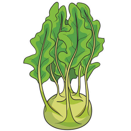 kohlrabi cabbage in green color and with foliage, cartoon illustration, isolated object on white background, vector, eps Illusztráció