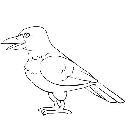sketch, raven bird, isolated object on white background, cartoon illustration, vector, eps