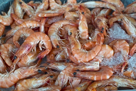fresh shrimp on ice photo