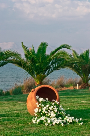 The amphora with flowers in the front of the palm tree photo