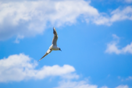 Gull flying against blue sky photo