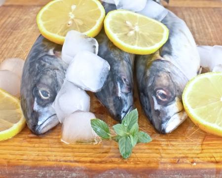 Fresh mackerel fish on ice photo