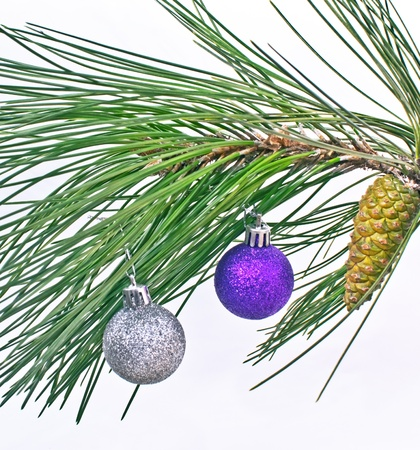Christmas ball on pine fir tree branches isolated on white Stock Photo - 15983861