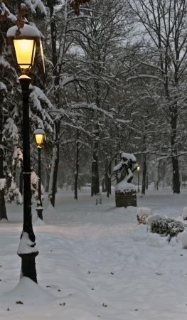 冬公園の夜 写真素材