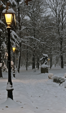 winter park with night Archivio Fotografico
