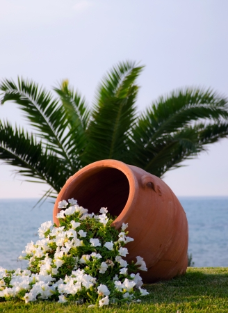 pelargonium: flowers in terracotta a pot in front of the sea beach