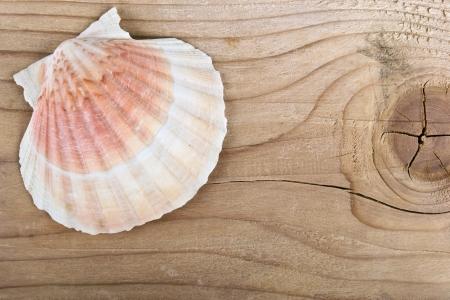 beachcomb: sea shell on a Wooden Board Stock Photo