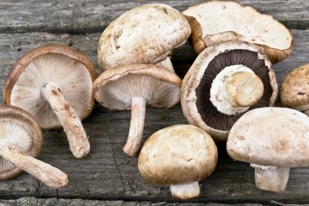 shiitake: shiitake and champignon mushrooms on wood kitchen table Stock Photo