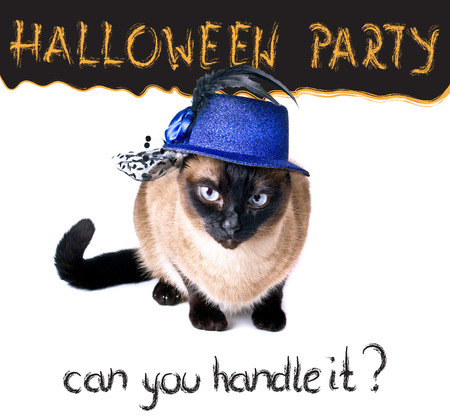 grouchy: Halloween party banner funny edgy jumpy Siamese Hilarious Humor Cat Stock Photo