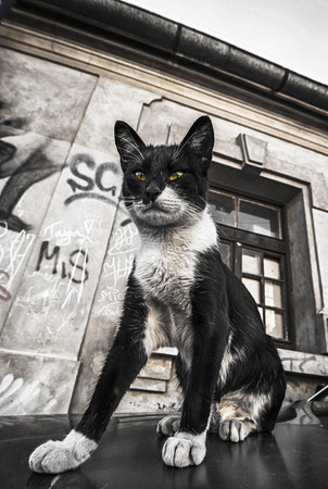 graffiti brown: cat on the car and street graffiti on old wall grunge effect Stock Photo