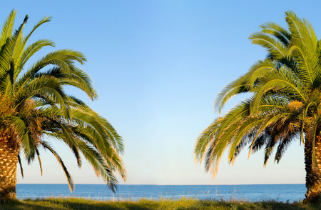 palm tree by the sea beach photo