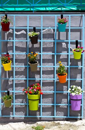 strret: Flower pots on wall