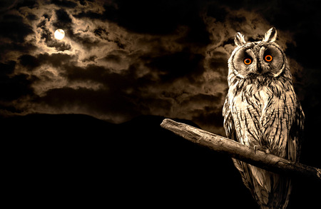 owl and full moon halloween abstract background Stock Photo