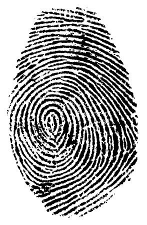 somebody: Fingerprint vector illustration Illustration