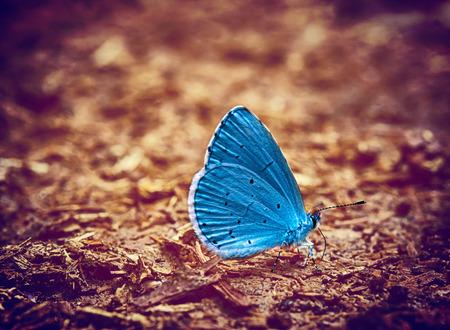 Blauwe vlinder vintage foto