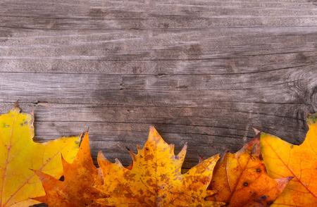 hojas antiguas: Hojas oto�ales sobre fondo de madera