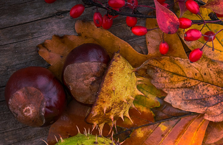 Autumn Leaves over wooden background