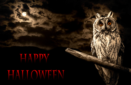owl and full moon halloween abstract background 스톡 콘텐츠