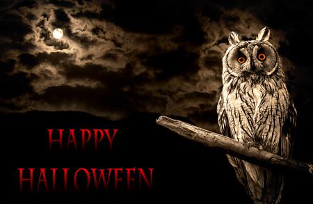 owl and full moon halloween abstract background 版權商用圖片