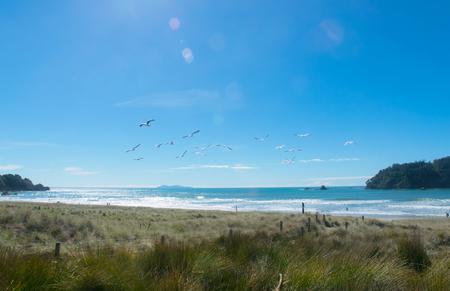 seagulls flying over tranquil tauranga beach new zealand