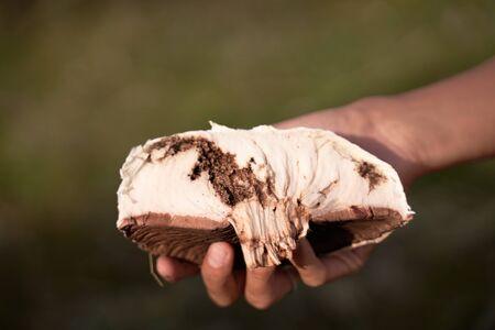 Mushroom on field was of poor quality: wormy