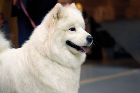 Dog is on exhibition to get title. image of animal