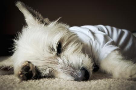 Holly Asleep