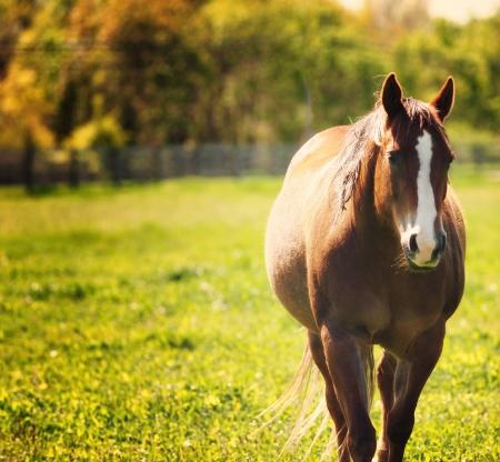 Macari Horse